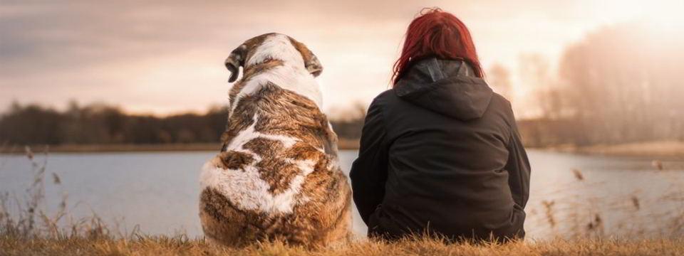 importancia-perros